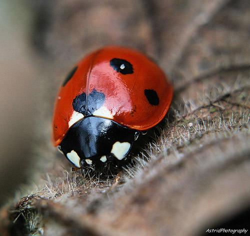 30 de poze cu...insecte! - Poza 7