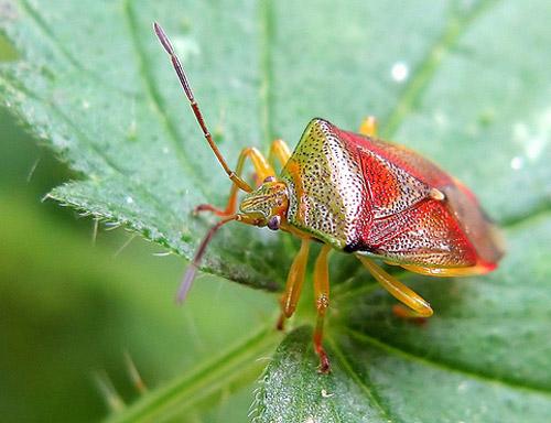 30 de poze cu...insecte! - Poza 22