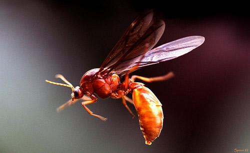 30 de poze cu...insecte! - Poza 8