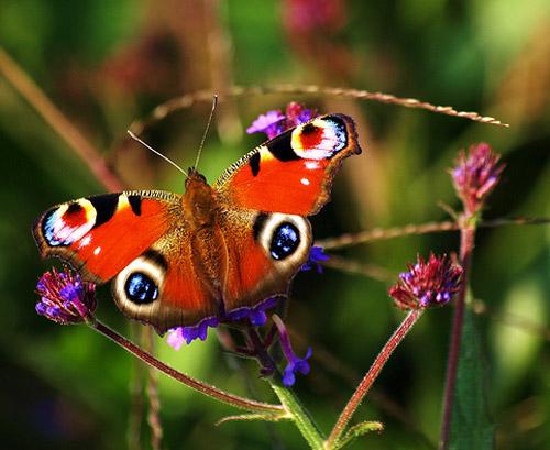 30 de poze cu...insecte! - Poza 9