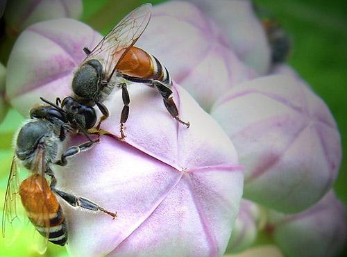 30 de poze cu...insecte! - Poza 11