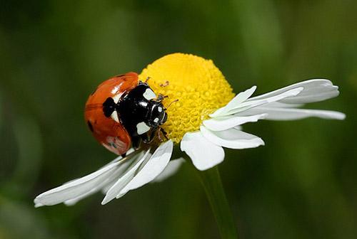 30 de poze cu...insecte! - Poza 12