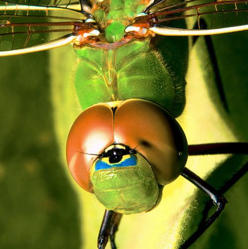 30 de poze cu...insecte! - Poza 28