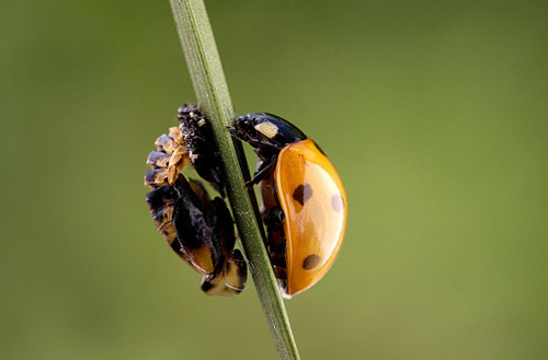 30 de poze cu...insecte! - Poza 14