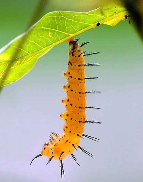 30 de poze cu...insecte! - Poza 16