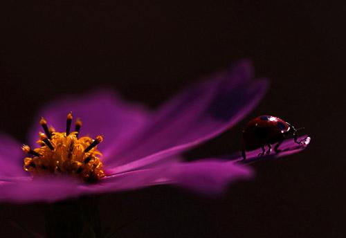 30 de poze cu...insecte! - Poza 18