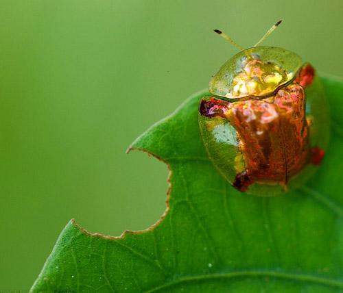 30 de poze cu...insecte! - Poza 19