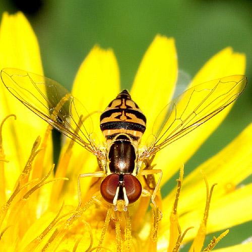 30 de poze cu...insecte! - Poza 1