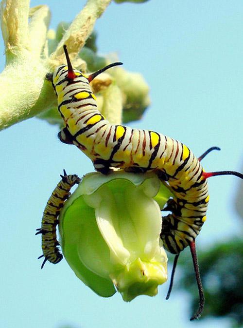 30 de poze cu...insecte! - Poza 26