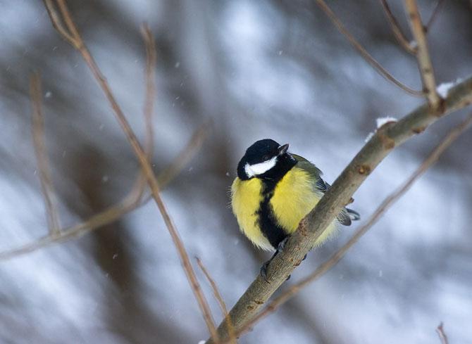 Natura in 25 de fotografii extraordinare - Poza 25