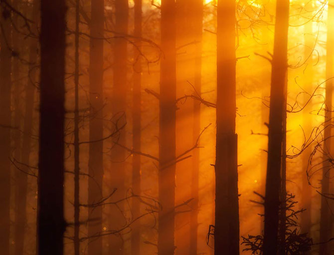 Natura in 25 de fotografii extraordinare - Poza 3