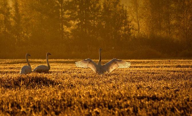 Natura in 25 de fotografii extraordinare - Poza 4