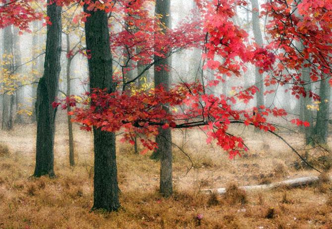 20 de poze minunate de la John Barclay - Poza 4