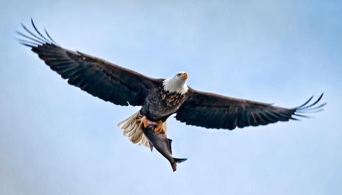 25 de poze cu natura: John Fan - Poza 1