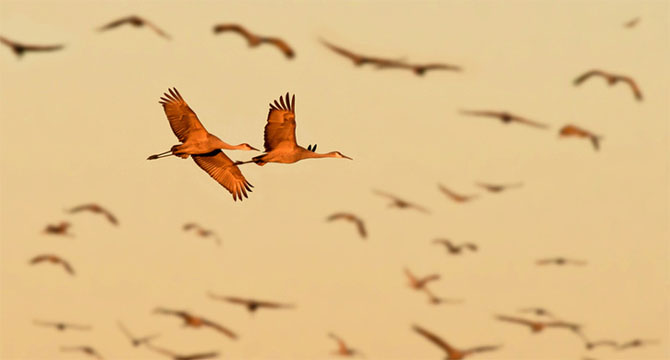 25 de poze cu natura: John Fan - Poza 10