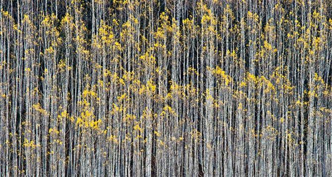 25 de poze cu natura: John Fan - Poza 14