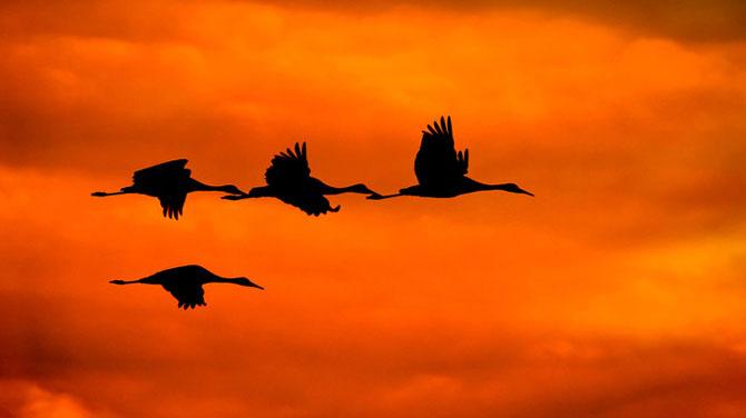 25 de poze cu natura: John Fan - Poza 18