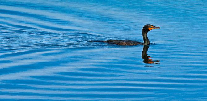 25 de poze cu natura: John Fan - Poza 21