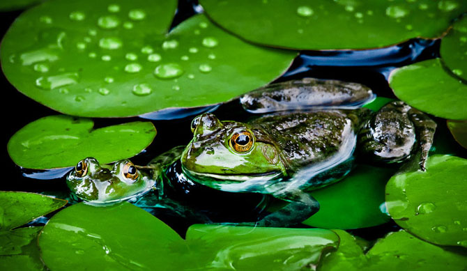25 de poze cu natura: John Fan - Poza 22