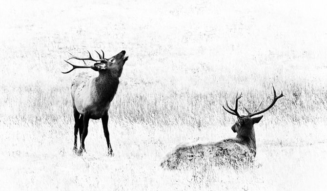 25 de poze cu natura: John Fan - Poza 24