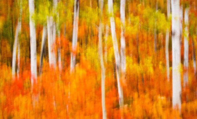 25 de poze cu natura: John Fan - Poza 25