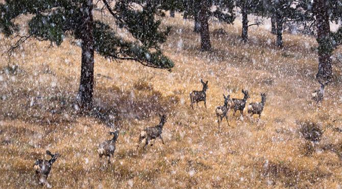 25 de poze cu natura: John Fan - Poza 3