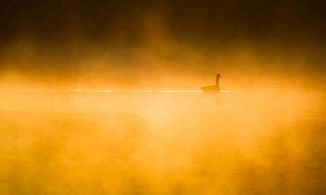 25 de poze cu natura: John Fan - Poza 4