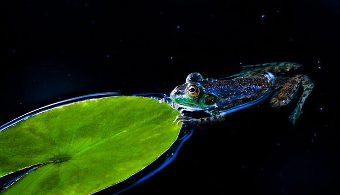 25 de poze cu natura: John Fan - Poza 7