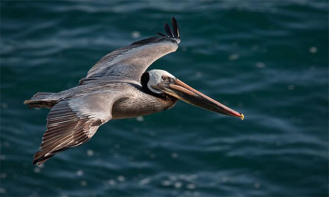 25 de poze cu natura: John Fan - Poza 8