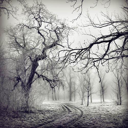 Foto - Art by Borbala Suto-Nagy - Poza 1