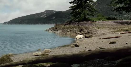 Nissan Leaf: Ursul polar - Poza 1