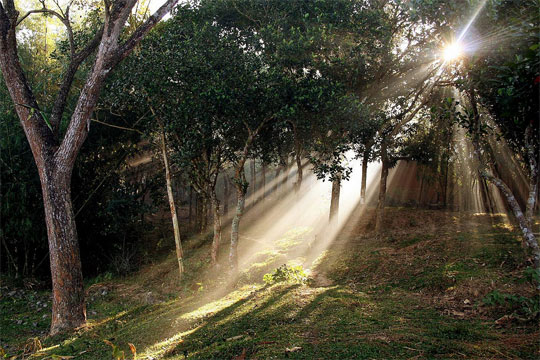 Lumina naturala in 30 de exemple magice - Poza 23