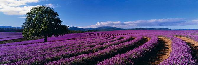 20 de panorame minunate de Peter Lik - Poza 3