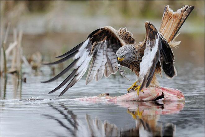 30 de fotografii profesioniste: Natura salbatica - Poza 10