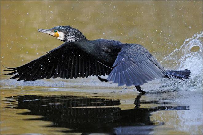 30 de fotografii profesioniste: Natura salbatica - Poza 11