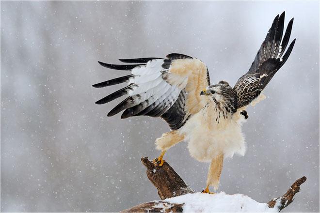 30 de fotografii profesioniste: Natura salbatica - Poza 15