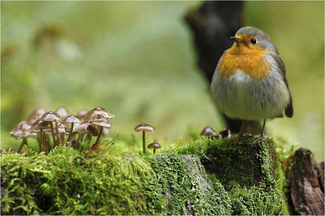 30 de fotografii profesioniste: Natura salbatica - Poza 18