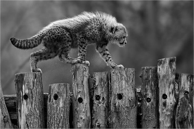 30 de fotografii profesioniste: Natura salbatica - Poza 20