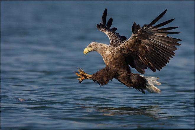 30 de fotografii profesioniste: Natura salbatica - Poza 21
