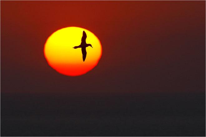 30 de fotografii profesioniste: Natura salbatica - Poza 22
