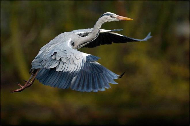30 de fotografii profesioniste: Natura salbatica - Poza 23