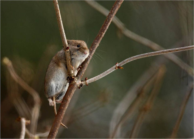 30 de fotografii profesioniste: Natura salbatica - Poza 24