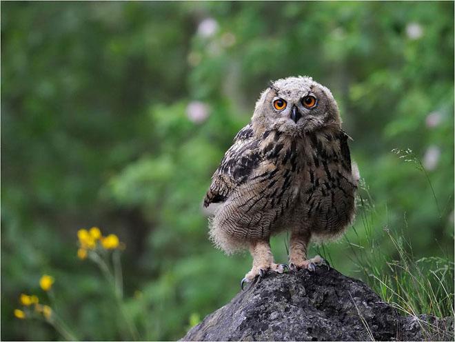 30 de fotografii profesioniste: Natura salbatica - Poza 25