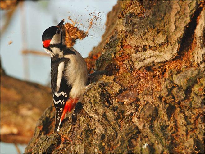 30 de fotografii profesioniste: Natura salbatica - Poza 26