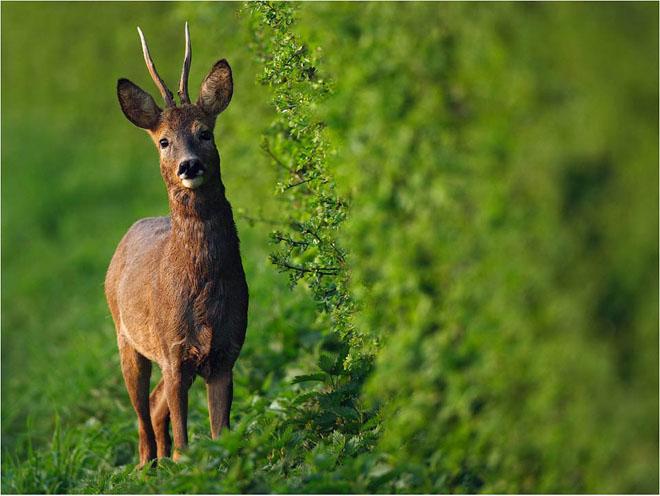 30 de fotografii profesioniste: Natura salbatica - Poza 29