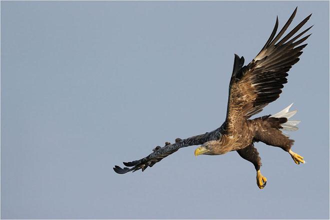 30 de fotografii profesioniste: Natura salbatica - Poza 4