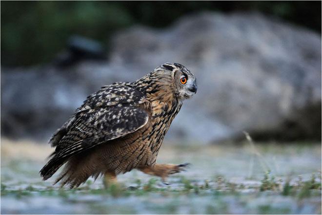30 de fotografii profesioniste: Natura salbatica - Poza 6