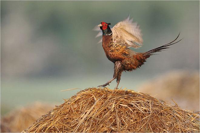 30 de fotografii profesioniste: Natura salbatica - Poza 7