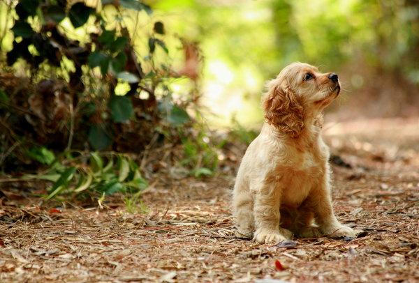 Atentie: Animale simpatice in 45 de poze! - Poza 28