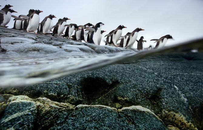 Super fotografii: Marile migratii - Poza 1